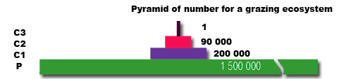 Pyramid of Numbers 1