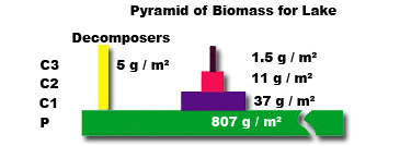Mr G's Environmental Systems » 2.1. 4: Ecological pyramids